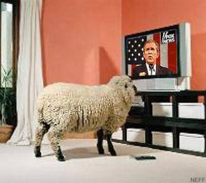 bush_sheep